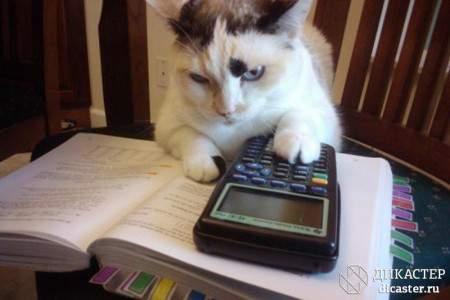 представление бухгалтерской отчетности увлекательный процесс